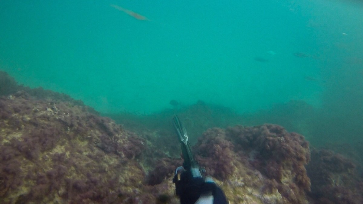 With tourist season gone spearfishing season is on