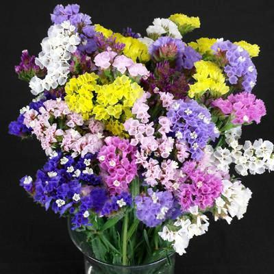 Statice Mix Flowers Seeds