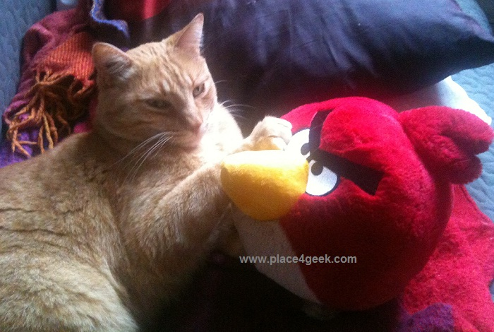 Mon chat qui joue à Angry Birds