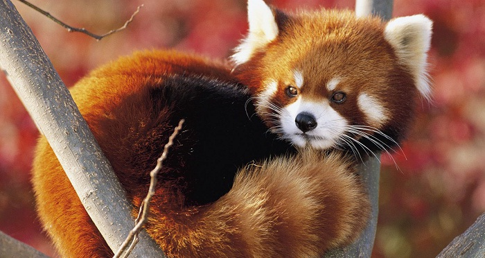 Firefox 7 beta est disponible