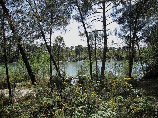 Lac landes biodiversité paysage