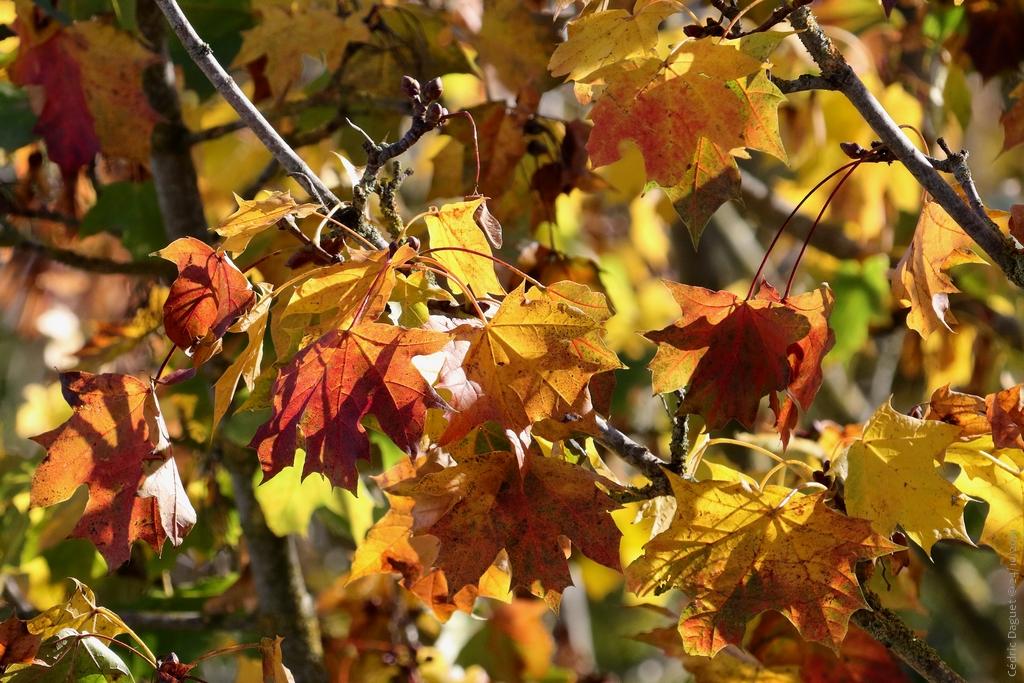 L' automne : saison charnière pour la nature