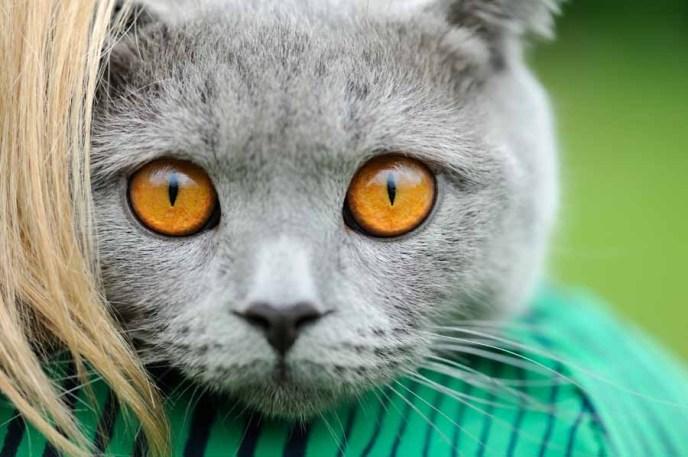 Smartphone Movie Cat
