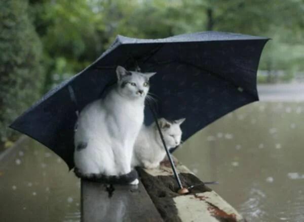 La Meteorologia Popolare: Proverbi, Modi di Dire, Credenze e Barometri  Viventi – Placida Signora