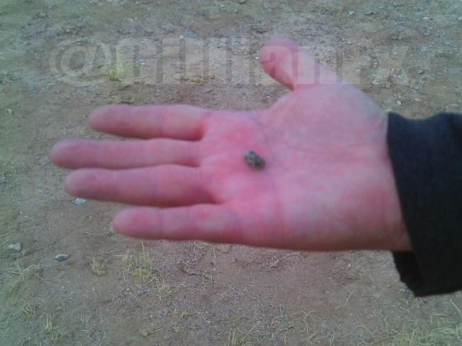 Trinitite found at Ground Zero Trinity Site NM