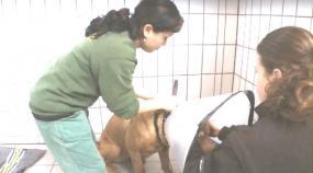 Tierpflegemeister Gehalt