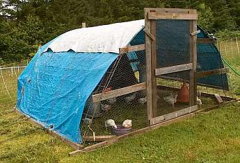 A small hoophouse chicken coop for pastured poultry