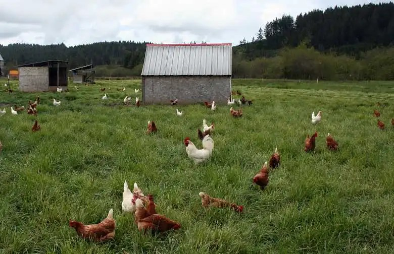 Range Poultry Housing: Coops for Grass-Fed Chickens [Videos]
