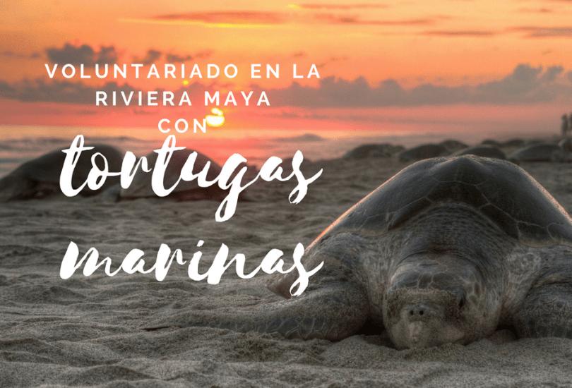 plan b viajero - voluntariado con tortugas marinas en la riviera maya , voluntariados en mexico
