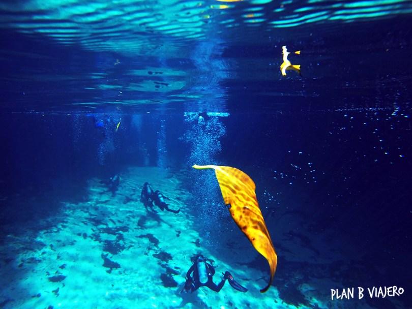 plan b viajero, casa cenote diving, cenotes tulum
