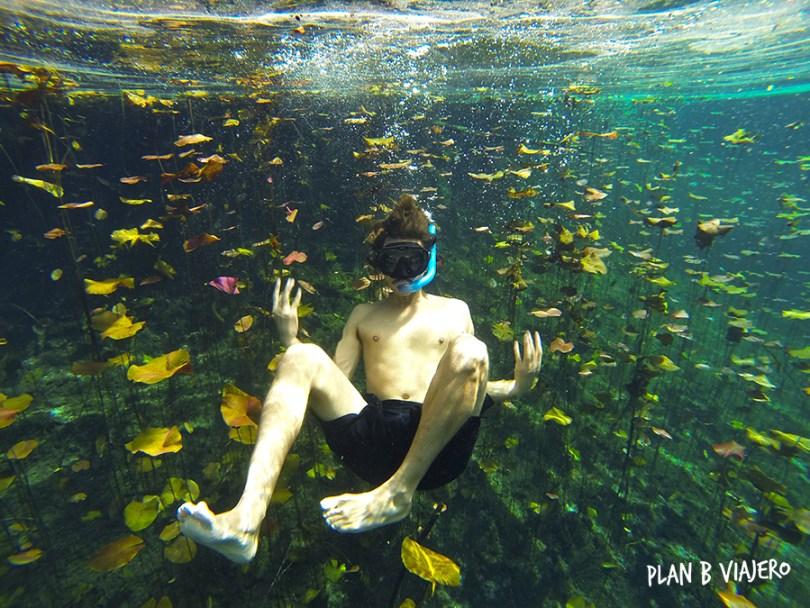 plan b viajero, cenotes en Tulum, cenote carwash nenufares