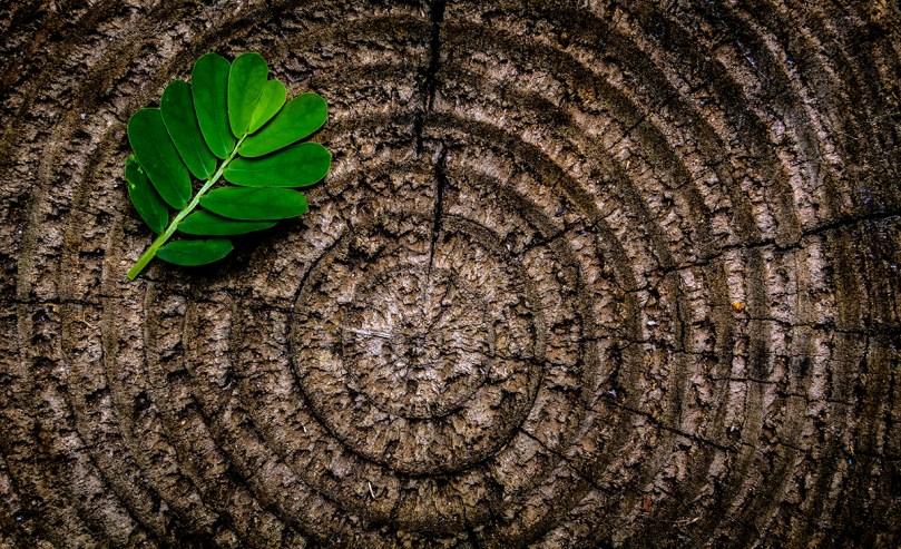 plan-b-viajero-habitos-para-una-vida-sustentable-verde
