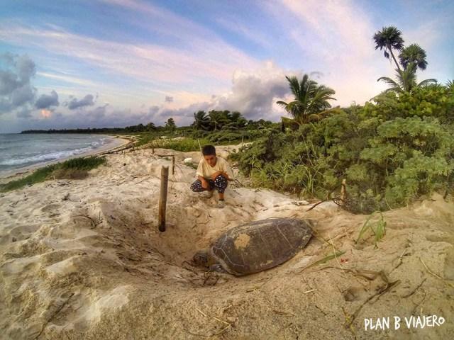 plan b viajero, turismo responsable con animales, voluntariado con tortugas marinas, quintana roo