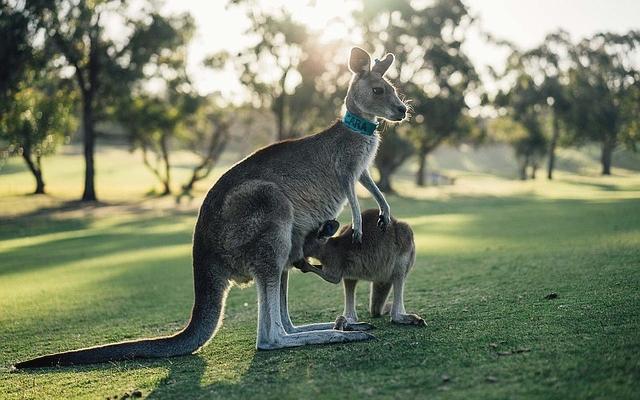 Voyage Camping Car Australie Les Grands Espaces De La