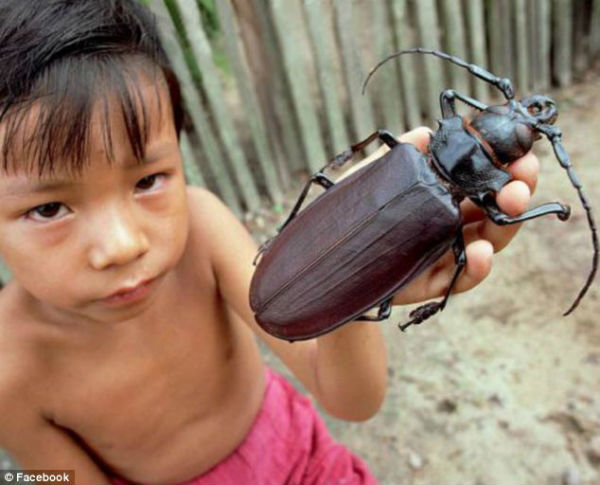 escarabajo_titan