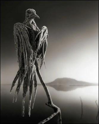Resultado de imagen de animales petrificados lago norton