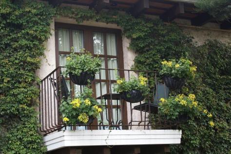 trepadora balcon