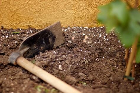 cuidado de plantas: hay que elegir el sustrato adecuado