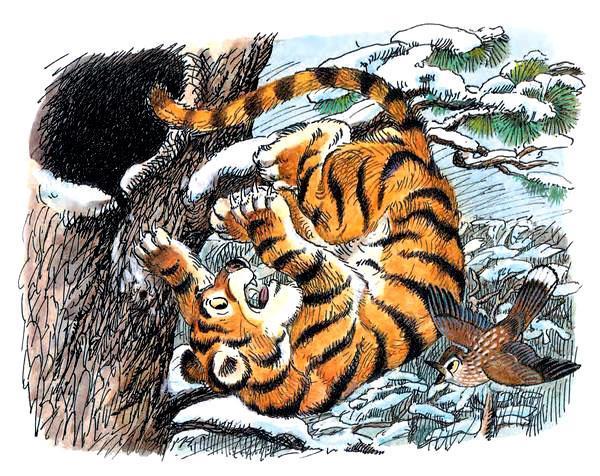 тигрёнок упал в снег, он сразу в клубочек свернулся и немного согрелся