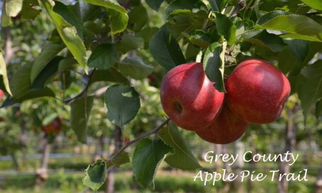 Grey County:  Apples Meet Wine, Great Food And Art