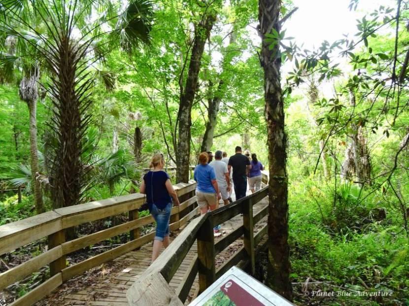 Treasure Coast Florida Bald Cypress Forest