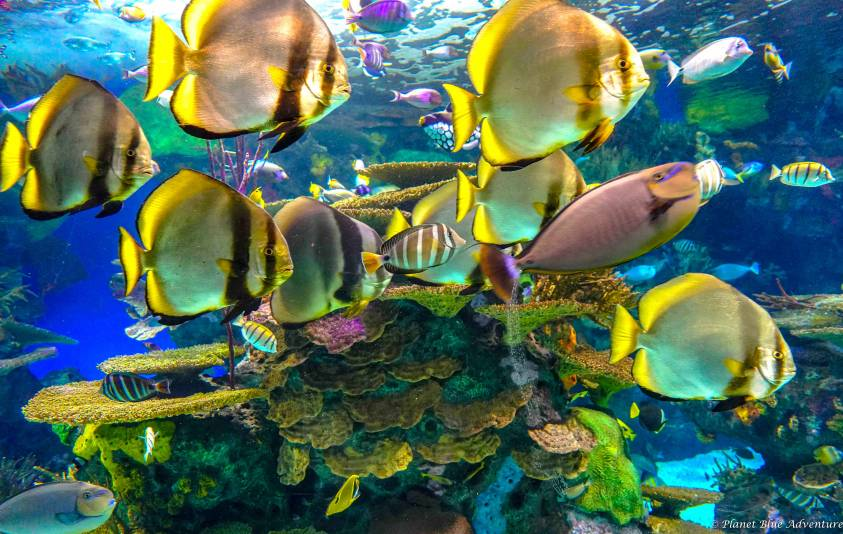 Ripley's Aquarium of Canada – Tips for Visiting