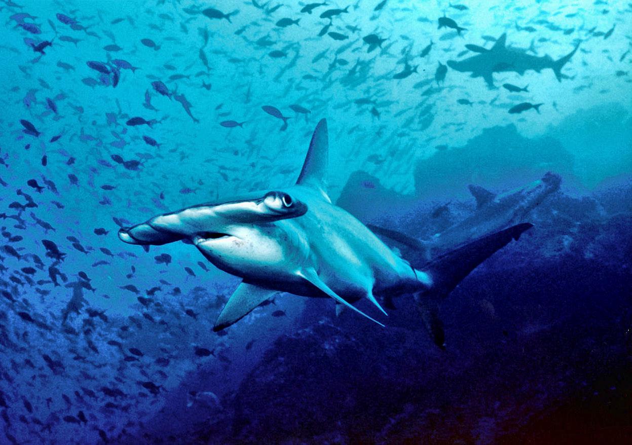 10 deadliest sharks | planet deadly list