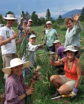 community farm meditation
