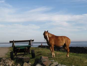 Horse and Cart Dharma
