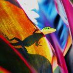 Lezard-couleurs-ombres