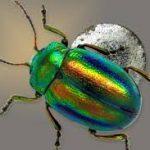 scarabée-egypte-reiki-couleurs