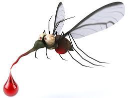 Moustique-piqure