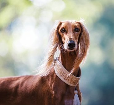 Laisses et colliers pour chien