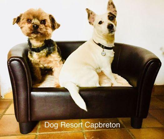 dog resort capbreton