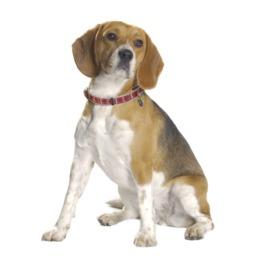 Collier kilt rouge chien bobby