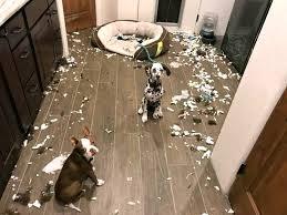 dégât chien maison