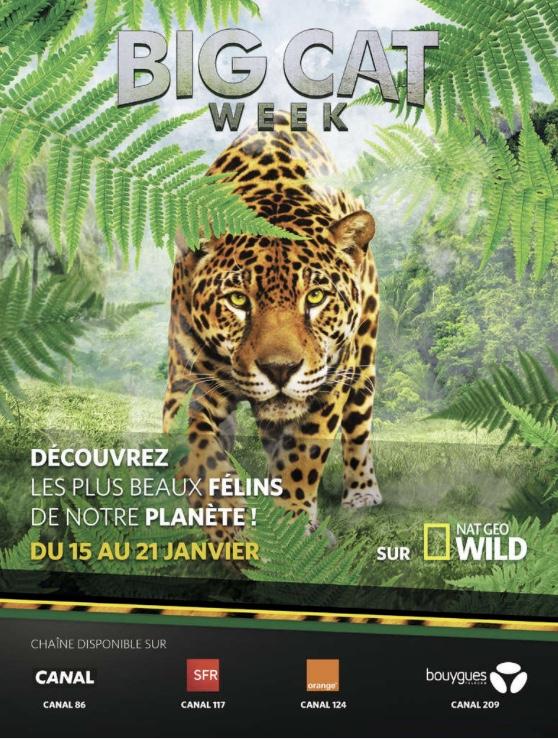 Campagne de publicité Nat Geo Wild Décembre 2017