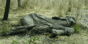 Elephant Poaching in Cameroon