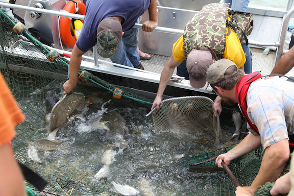 Fishing for Asian carp (Source: Flickr)