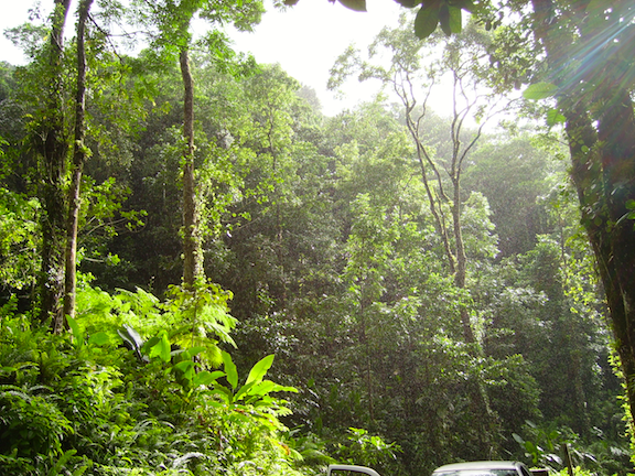 Tropical forest in Martinique, France (Source: Creative Commons)