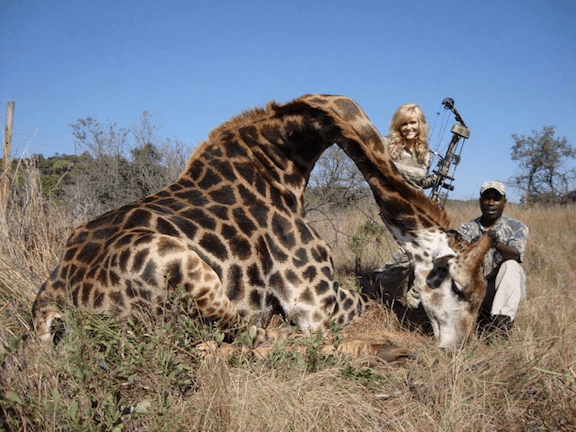Rebecca Francis poses with the dead giraffe. (Image via HuntingLife.com)