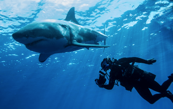 Steve Backshall with Great white shark. (Image Credit: WikiMedia Commons)