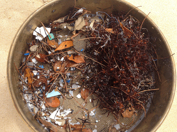 Microplastic dredged from an ocean trawl. (Photo: 5 Gyres)