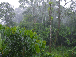 The rainforest of Tena, Ecuador. (Photo Credit: Lion Hirth)