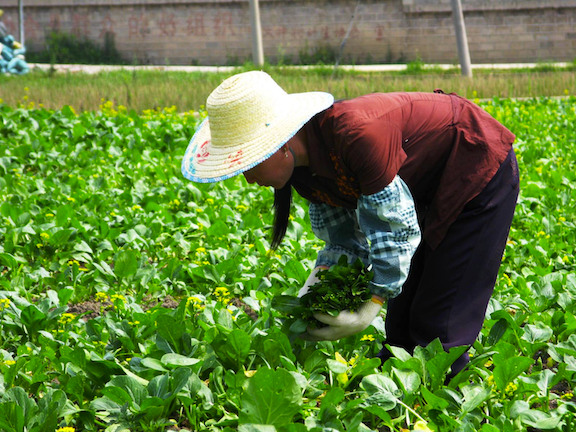Walmart's Direct Farm program in China. (Photo: Walmart / Flickr)