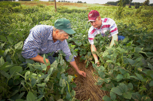 Farmers inspect their crop in Rockingham County, Virginia. (Photo Credit: Bob Nichols / U.S. Department of Agriculture)