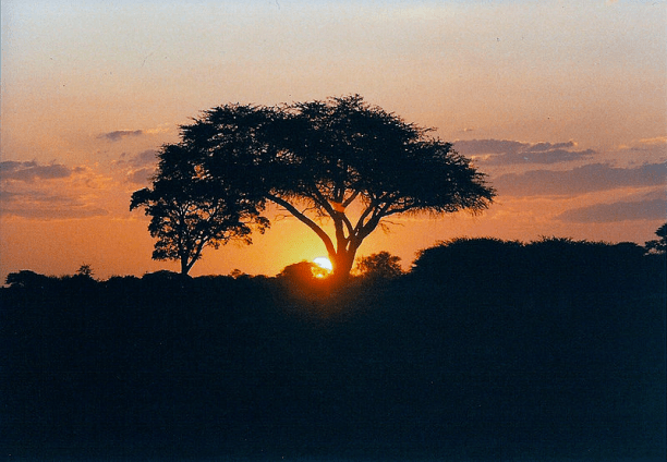 Sunset in Hwange National Park, Zimbabwe. (Photo: JackyR)