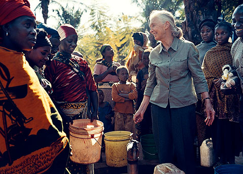 Dr. Jane Goodall. (Photo via JGI)
