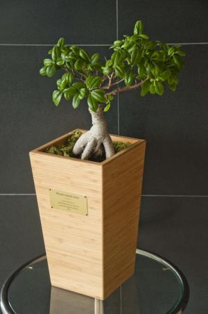 The night's winners receive an SBC Giving Tree Award Trophy, which is a Ming Aralia in a solid Bamboo planter. (Photo via SBC)