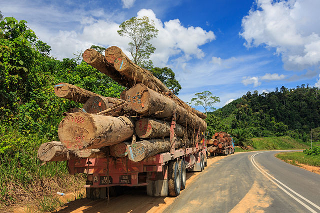 Two logging trucks at the Kalabakan-Sapulot-Road, taking heavy tropical timber logs to the log pond in Kalabakan, Malaysia. (Photo © CEphoto, Uwe Aranas)
